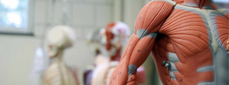 Ostéopathie Massothérapie Thérapie du sport